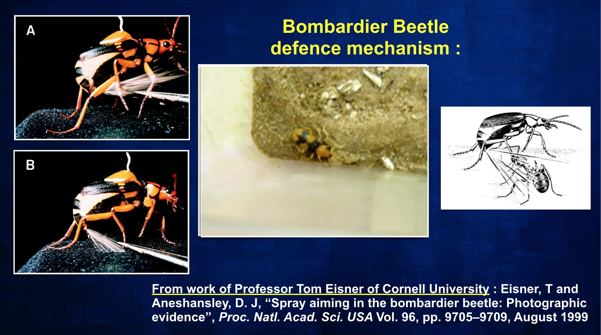 BBeetle Defence Mechanism