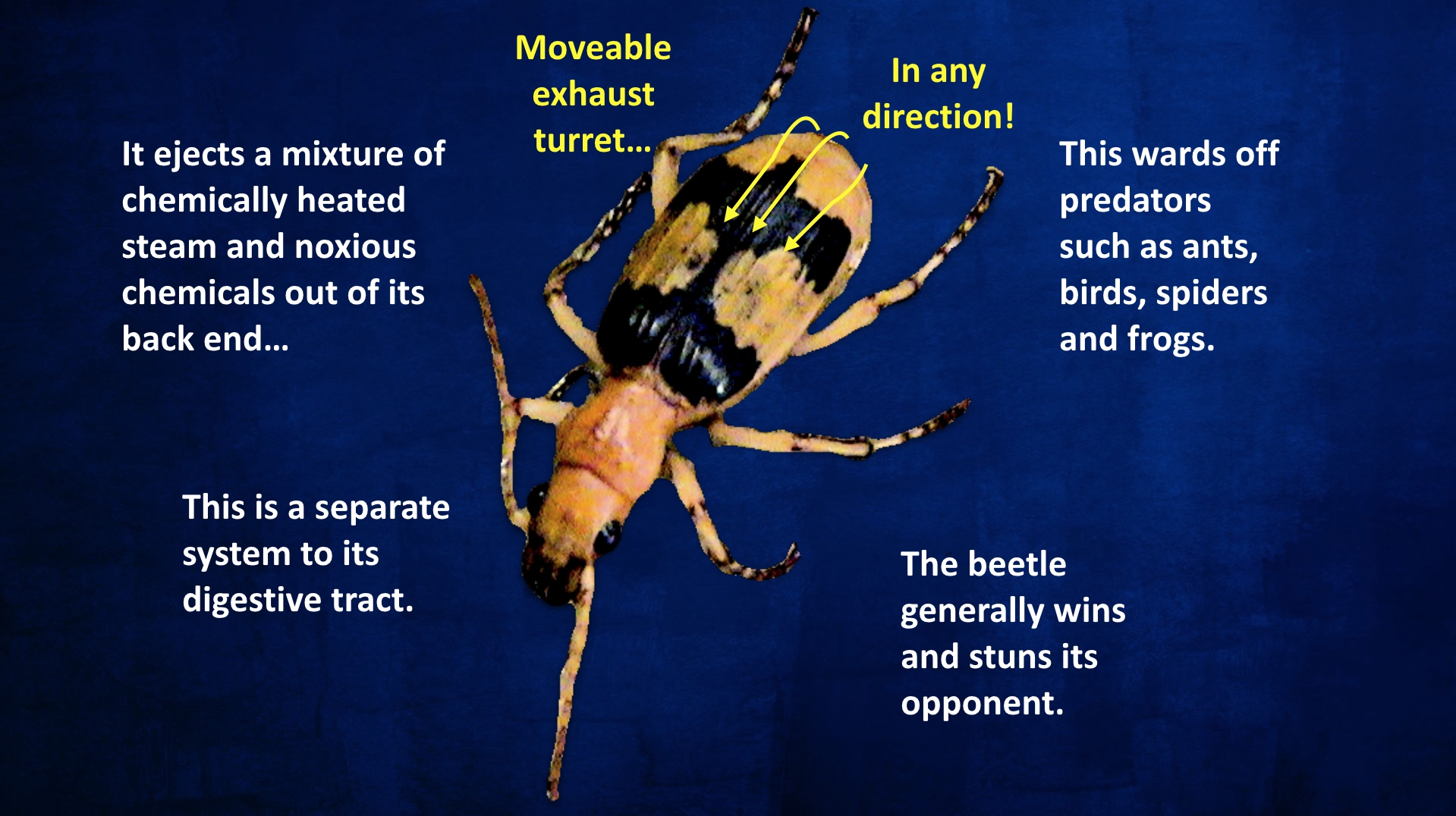 BBeetle description with Turret